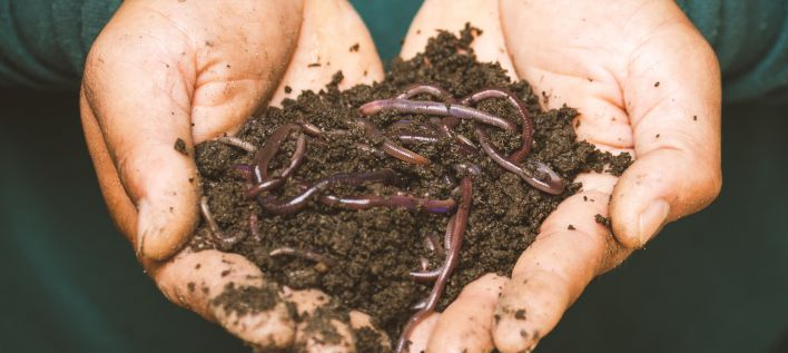 EdenPure Worm Castings