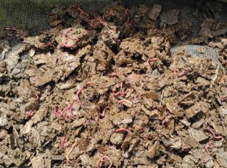 EdenPure Worm Casting Bedding